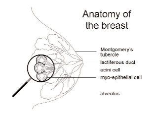 Breast construction